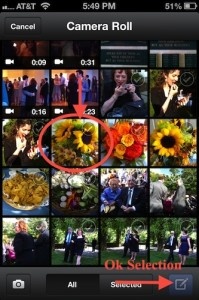 Select Sunflower Photos from iPhone Photo album